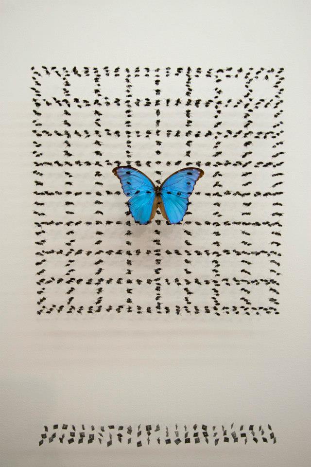 butterfly fly 2