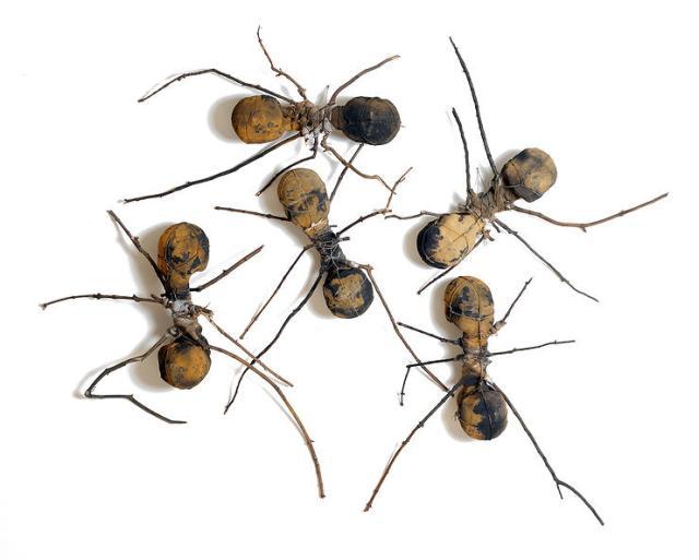 Rafa hormigas 0030