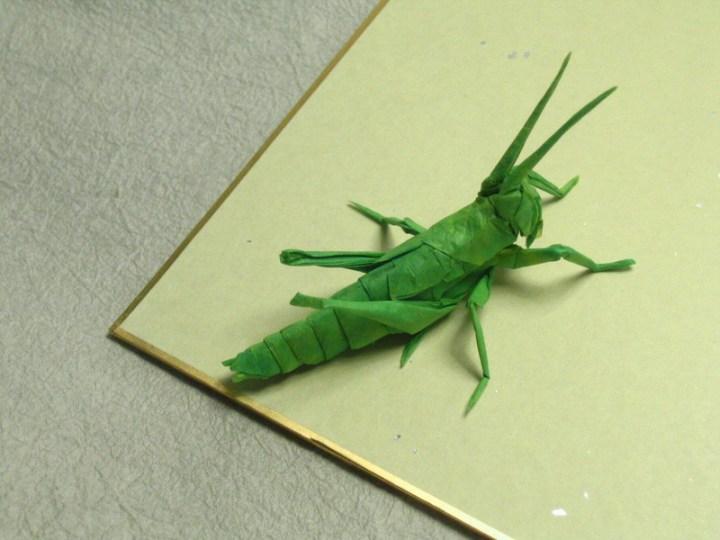 locustnymph